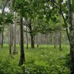 LAS CABANAS RESORT – PALAWAN, PHILIPPINES - My backyard