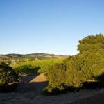 Meritage Resort - Napa Valley - The View