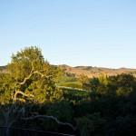 Meritage Resort - Napa Valley - Sunrise