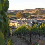 Meritage Resort - Napa Valley - Vineyard